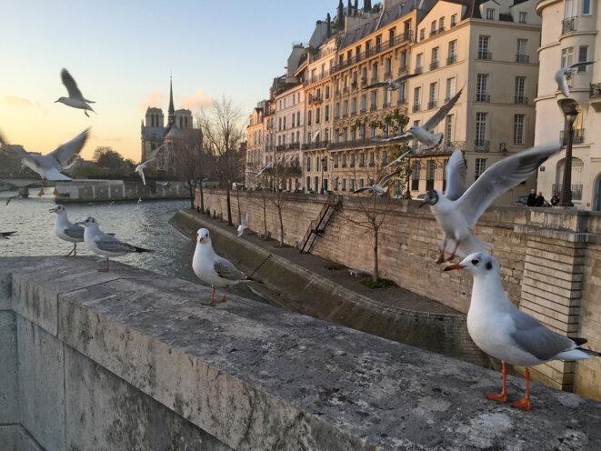 Pont de la Tournelle - 10 décembre 2015 © Gilles Walusinski
