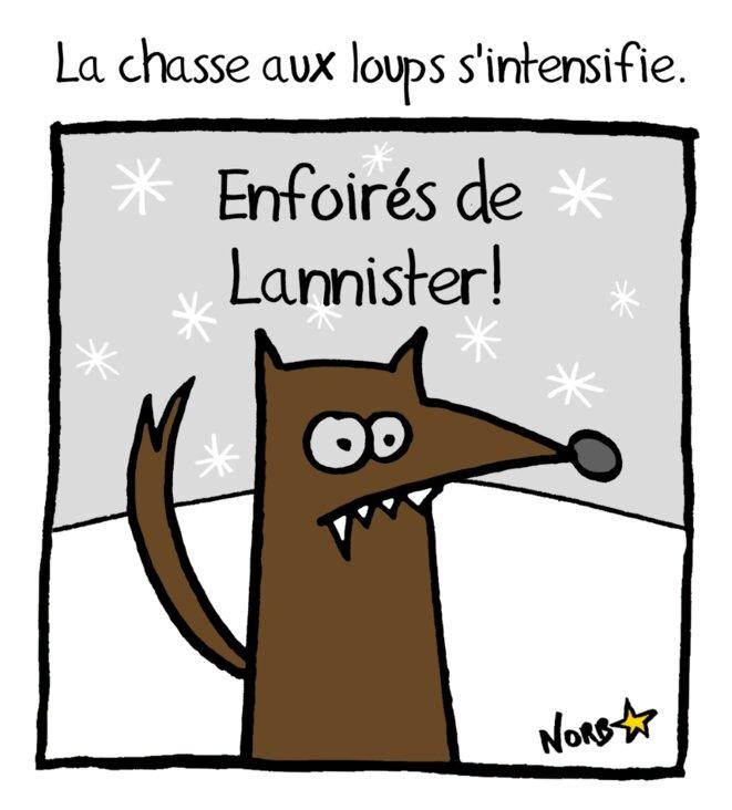 La chasse aux loups s'intensifie en France © Norb
