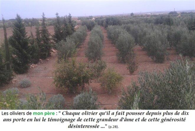 03-louizi-oliviers-png