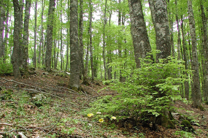 Forêt européenne © Bioversity International/Jeremy Cherfas