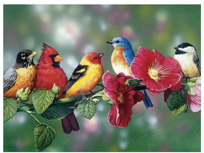 Zoizos multicolores © DR