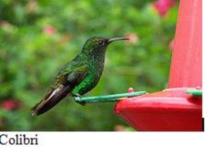 le-colibri © Altermonde-sans-frontières