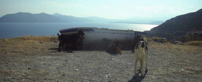 (Péninsule du Pélion (Grèce), août 2015, photo personnelle) © Jean-Jacques Cheval