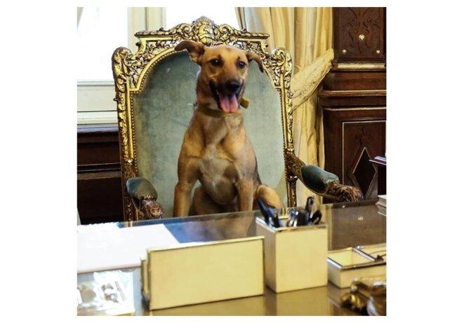 Chien de Macri sur le siège présidentiel