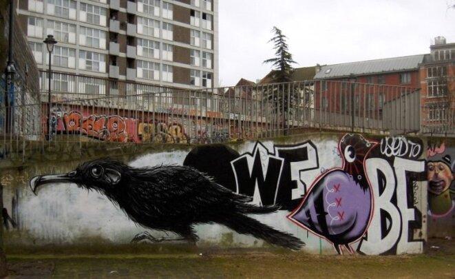 oiseaunoir-mur-cite © DR
