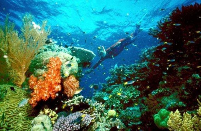 Touriste nageant dans la Grande barrière de corail © Reuters/Ho/Great Barrier Reef National Park Authority