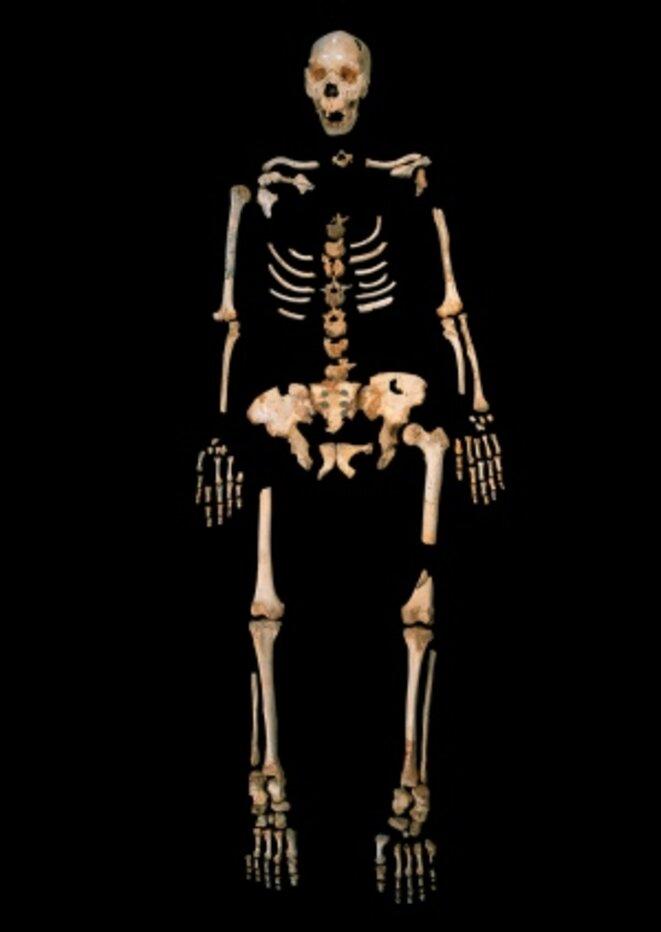 Squelette d'un Néandertalien ancien retrouvé dans la Sima de los Huesos, en Espagne © Javier Trueba, MADRID SCIENTIFIC FILMS
