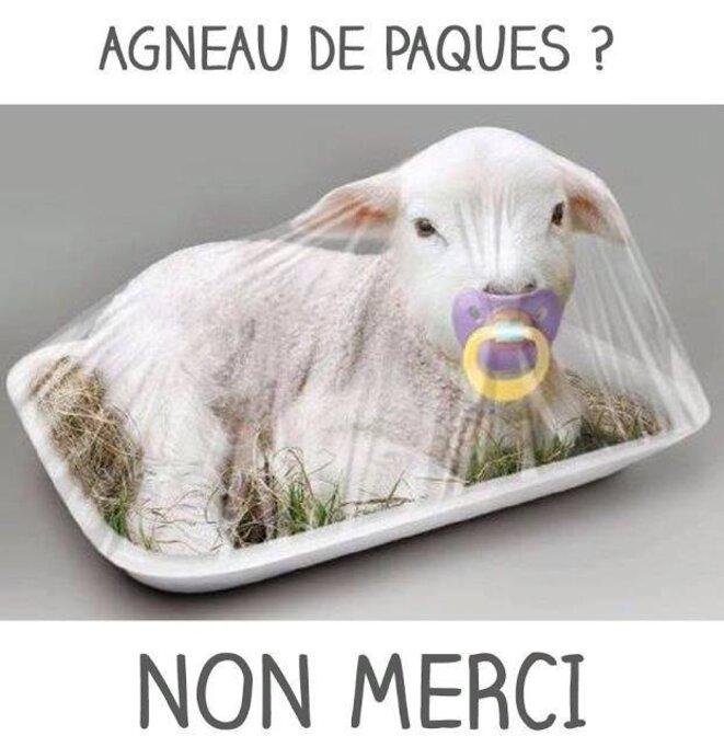 Un agneau pour attendrir ceux qui se prennent pour des durs Agneau-paques