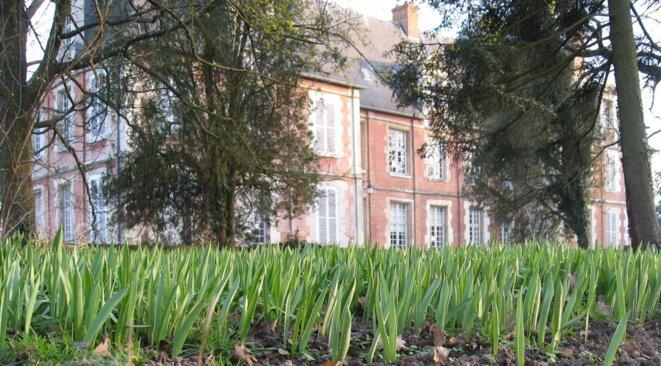 tulipes-sauvages-chateau-2008