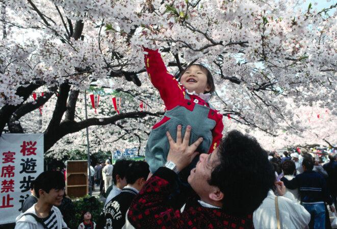 fete-cerisiers-japon