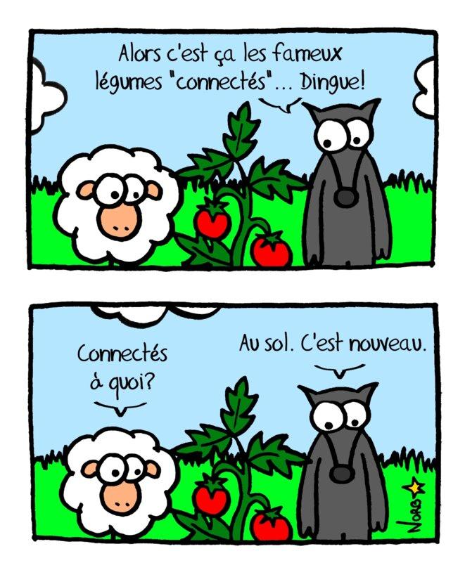 Les nouveaux légumes «connectés»! © Norb