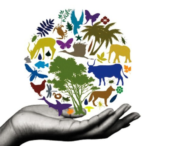 on-international-day-for-biological-diversity-un-highlights-biodiversitys-role-in-underpinning-development