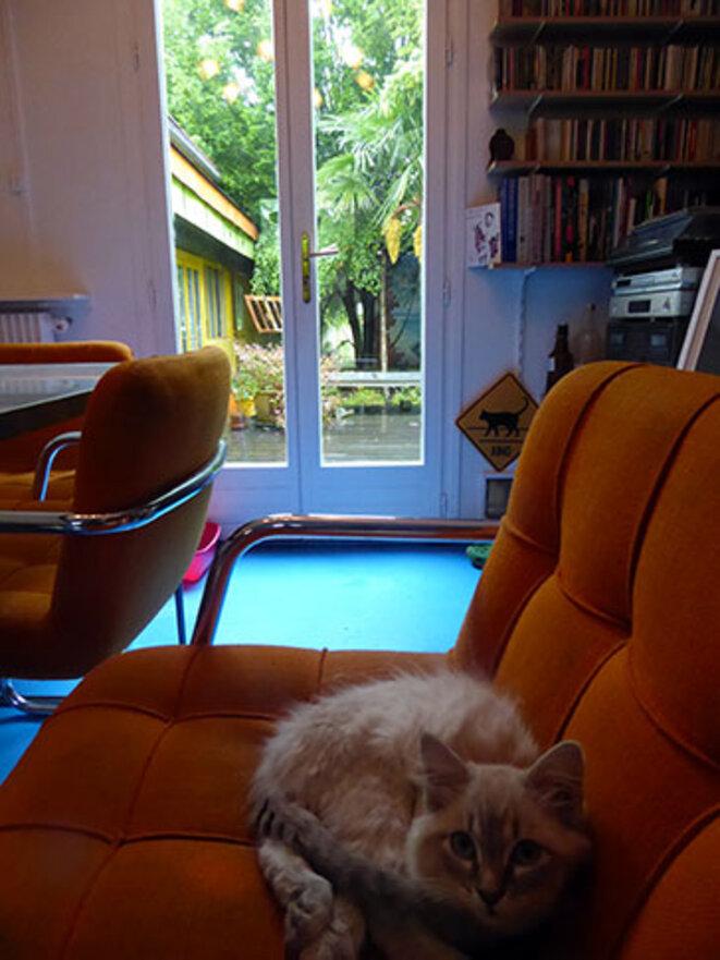 stromboli-kitten