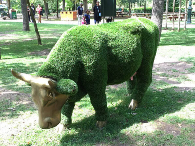 vache-gazon