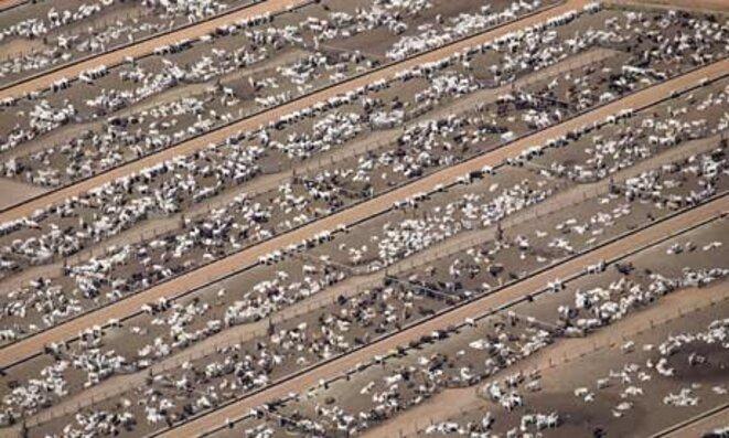 a-cattle-farm-at-estancia-002
