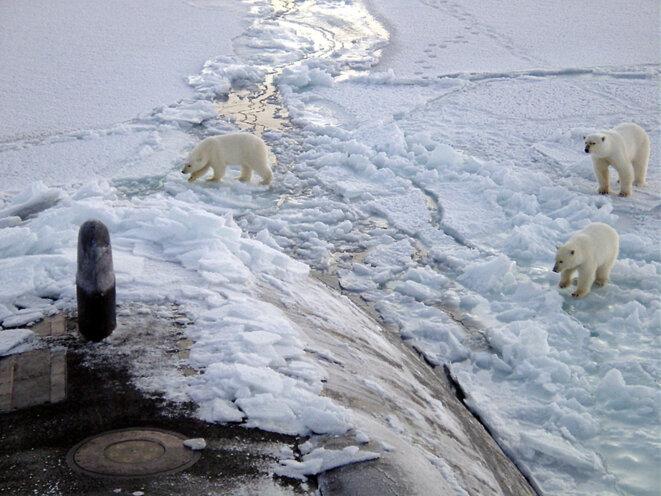Ours polaires sur le sous-marin USS Honolulu à 450 km du Pôle Nord © Chief Yeoman Alphonso Braggs, US-Navy