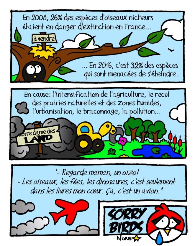 Oiseaux nicheurs de France: Sorry Birds... © Norb
