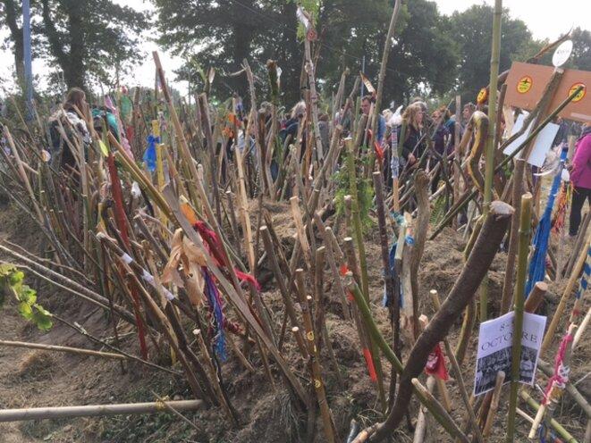 La forêt de bâtons plantés à Notre-Dame-des-Landes le 8 octobre par des opposants (JL)
