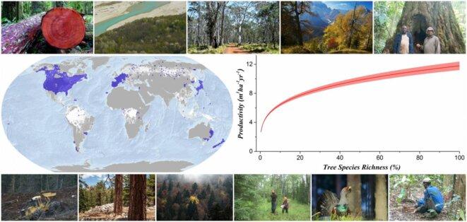 Les données de 777.126 sites forestiers dans le monde montre que la biodiversité favorise la productivité des forêts © Global Forest Biodiversity Initiative