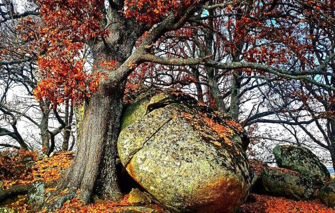 ils-re-inventent-la-corse-l-arbre-souleve-le-granit
