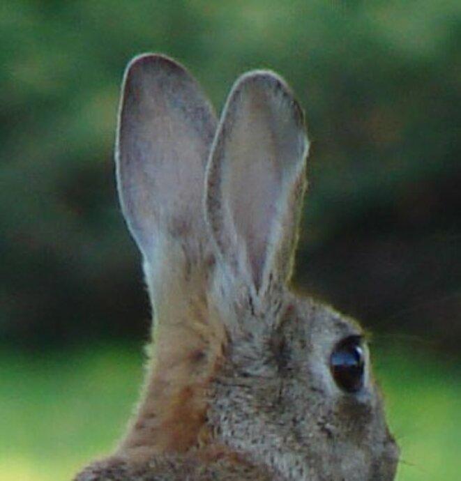 conejo-astronomo2-cropped