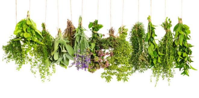 herbes-medicinales