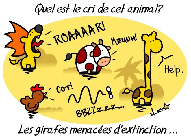 Les girafes menacées d'extinction © Norb