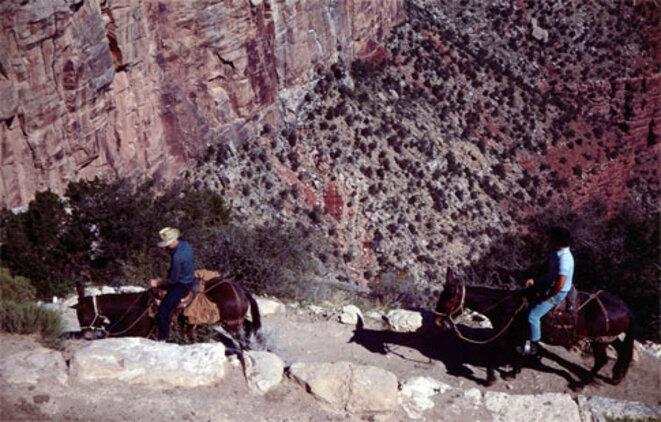 grand-canyon-horses