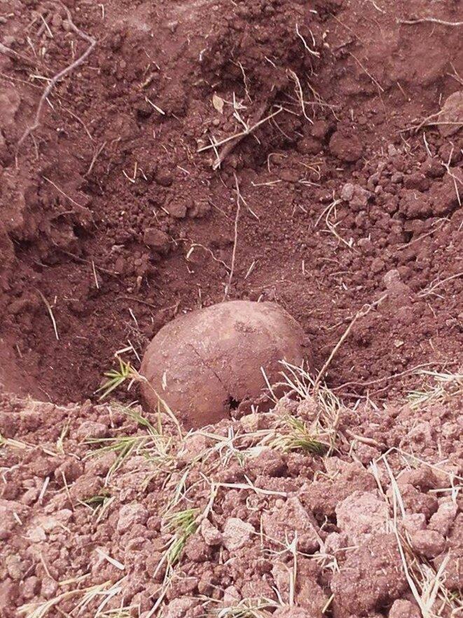 Crâne humain trouvé à la lisière d'un champ de maïs à El Potrero, Etat de Sinaloa © Clément Detry