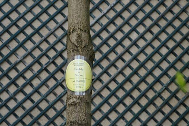 freddy-mulongo-cazeneuve-magnolia-19
