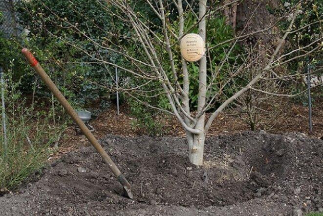 freddy-mulongo-cazeneuve-magnolia-27