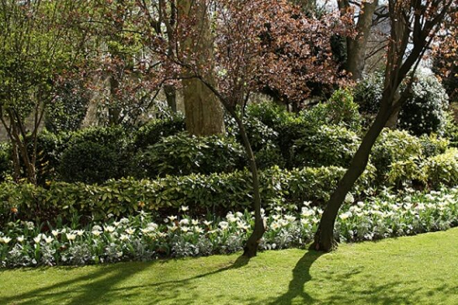 freddy-mulongo-cazeneuve-magnolia-6
