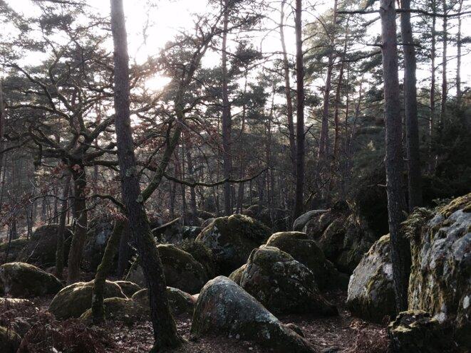 Forêt de Fontainebleau, le 10 mars 2017 © Grégoire Eloy / Tendance Floue