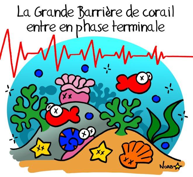 La Grande Barrière de corail en phase terminale © Norb