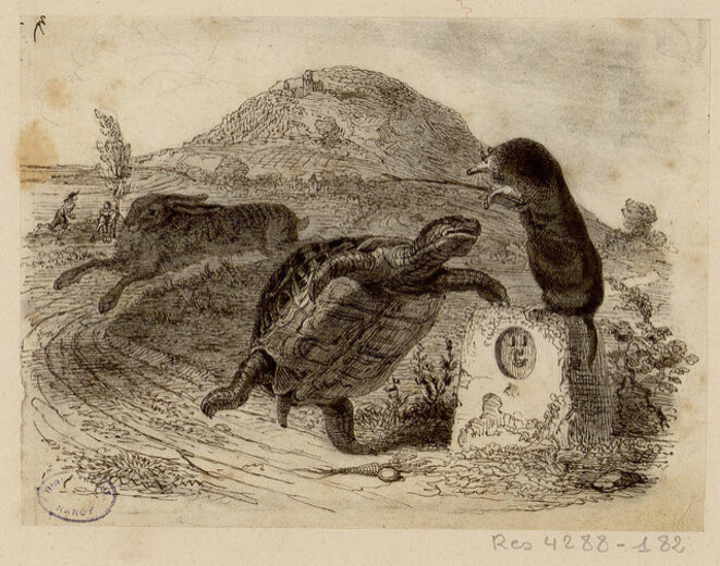Plutôt lièvre, ou tortue ? © Bibliothèques de Nancy / cc / Flickr