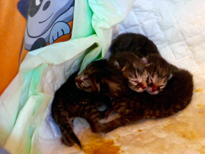 chatons-1-jour