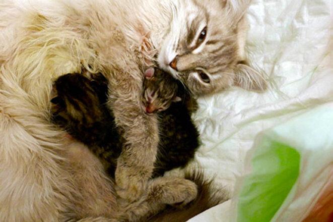 oulala-chatons