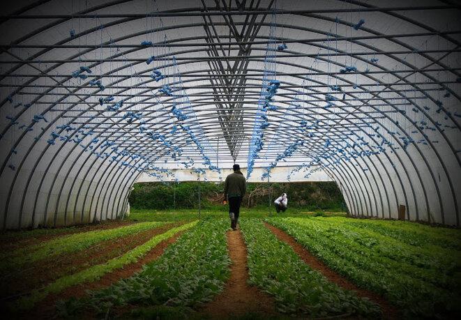 ©Samuel Gautier. La ferme de Moyembrie, en Picardie, accueille d'anciens détenus en insertion.