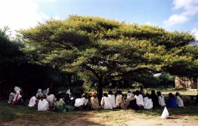 arbre-a-palabre