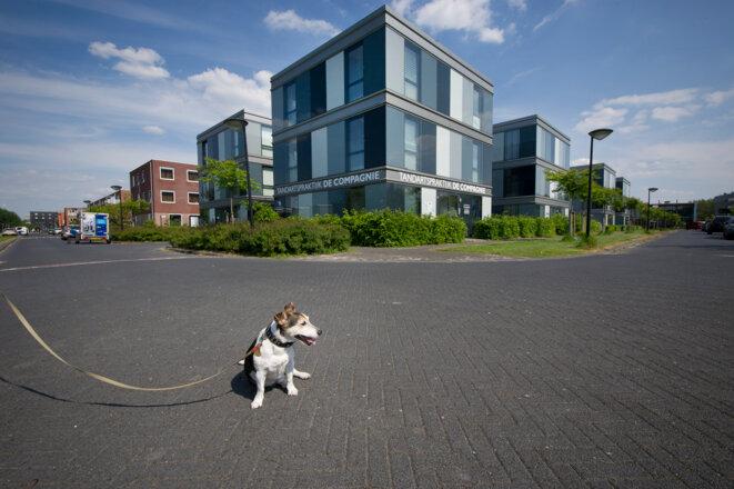 L'immeuble de la clinique dentaire du fils du premier ministre turc, à Almere (au nord d'Amsterdam), abrite aussi le siège de ses holdings néerlandaises. © Rien Zilvold / NRC Handelsblad