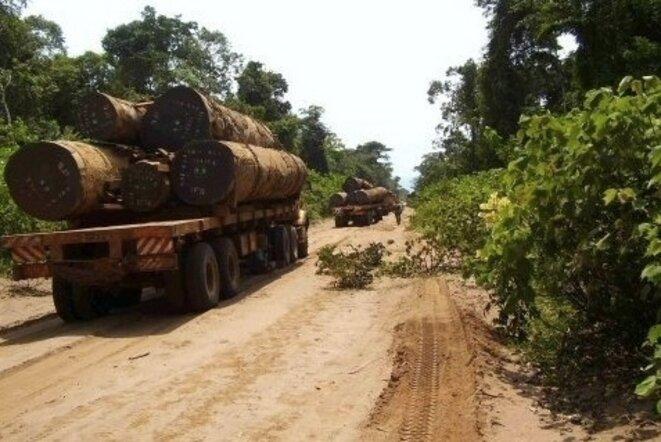Déforestation au Congo © LejournaldeBrazza.com