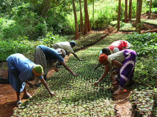 Green Belt Movement - Kenya