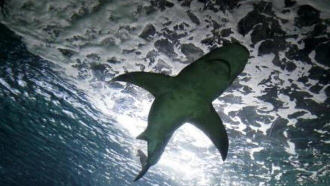 Nine people have died from shark attacks on La Réunion since 2011. © Reuters