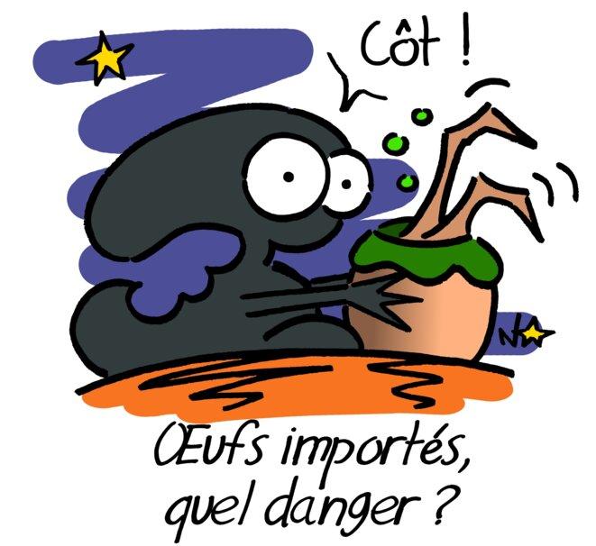 Œufs importés, quel danger? © Norb