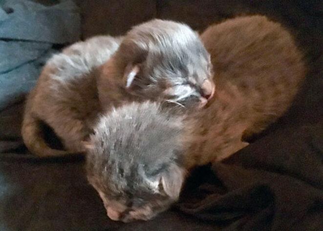 chatons-6-8-2017