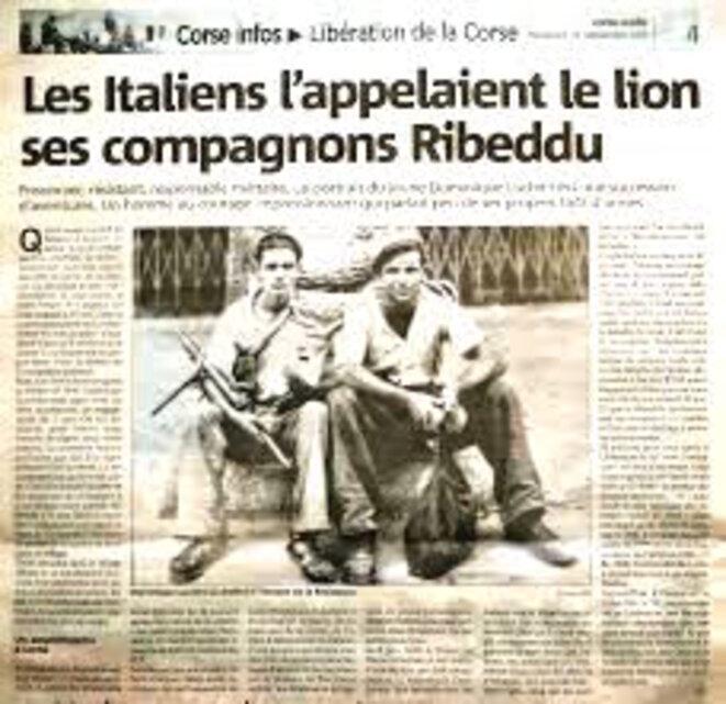ribeddu-lion