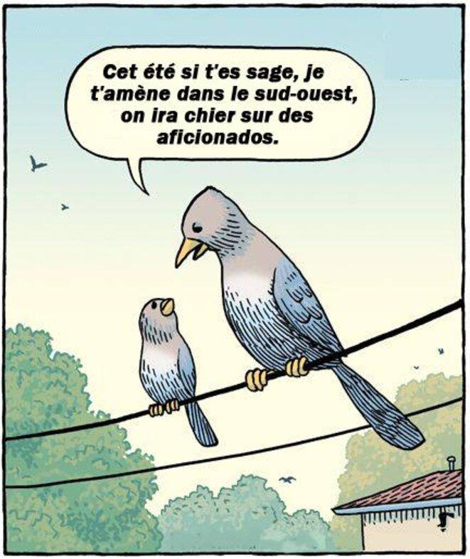 vacances-pigeons-1