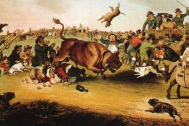 bull-dogs