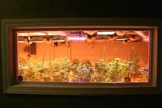 Dans le 3D Cannabis Center, à Denver au Colorado. © Iris Deroeux