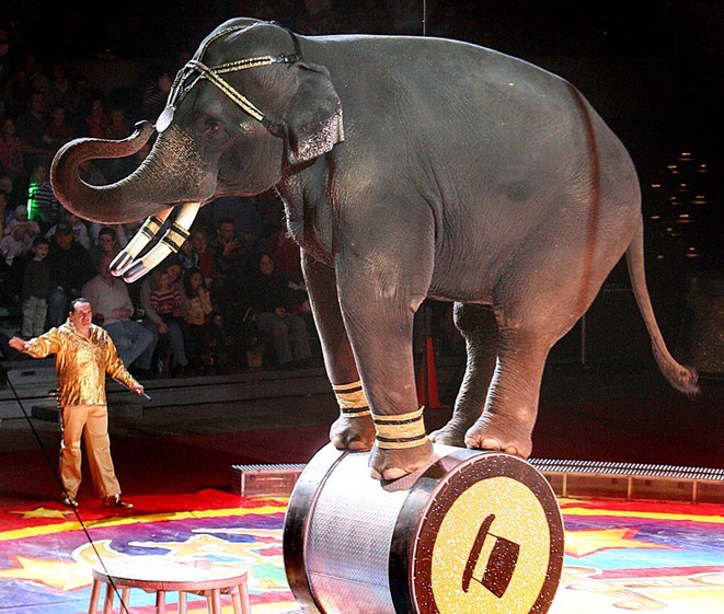 cirqueelephant-1